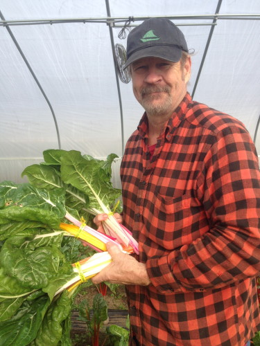 Brian picking the first chard of the season
