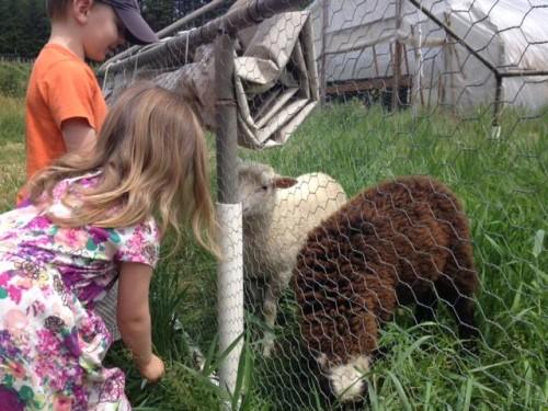 farm tour kids